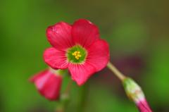 季節の花CLXXVII!