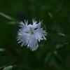 季節の花DCCLXI!