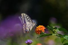 花と蝶CML!