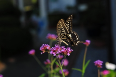 花と蝶CMXXXVI!