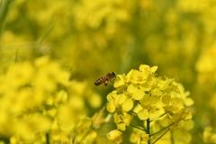 虫・昆虫と花CLXXIV!