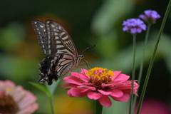 花と蝶MMCCXLII!