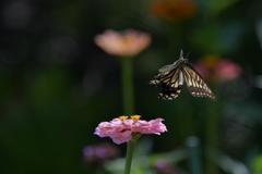 花と蝶MMCCLXXIV!