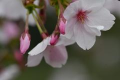 季節の花CCCXLII!