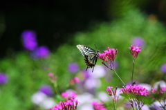 花と蝶MXLII!
