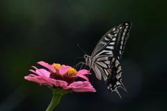 花と蝶 MMCCXLV!