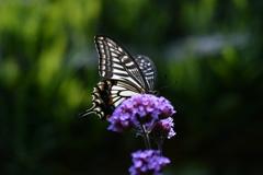 花と蝶MCCXXXVIII!