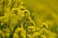 季節の花CCCI!