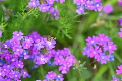 虫・昆虫と花CXXXVII!