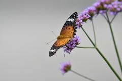 花と蝶MCCLVIII!