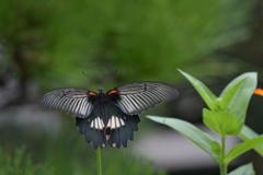 花と蝶MMCCLIII!