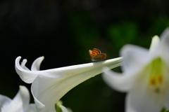 花と蝶CCII!