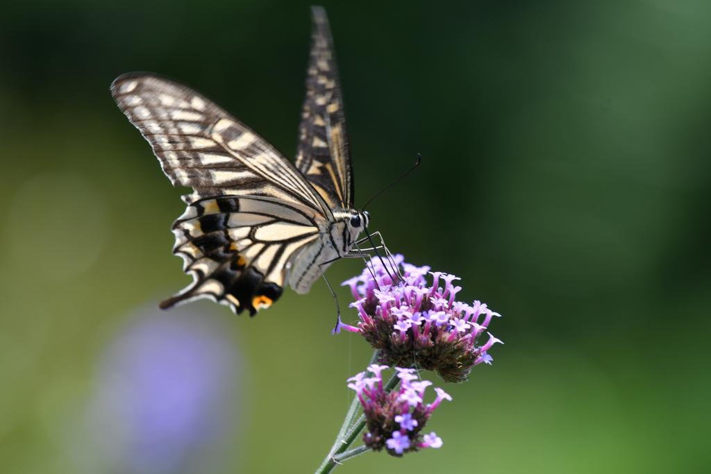 花と蝶MCCCLXXIX!