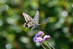 花と蝶MCCXL!