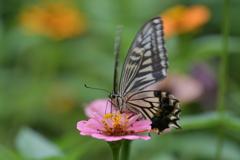 花と蝶MMCCXLVII!