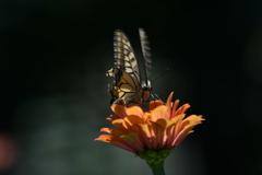 花と蝶MDCCLX!