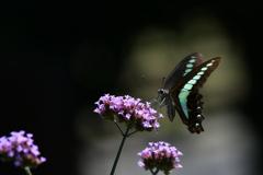 花と蝶MCCCLXXXVII!