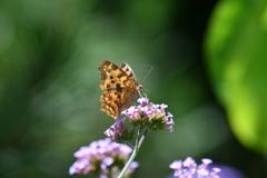 花と蝶MCCXLI!