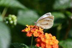 花と蝶MDCCCV!