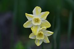 季節の花DCLII!