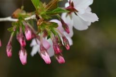 季節の花CCCXL!
