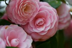 季節の花DCXLVI!