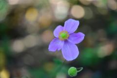 季節の花DXXXIX!