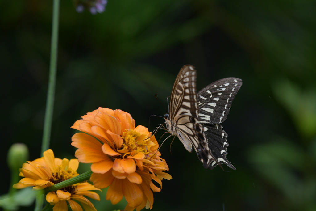 花と蝶MMCXLIV!