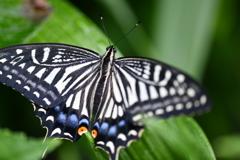 里山の蝶CCLXVIII!
