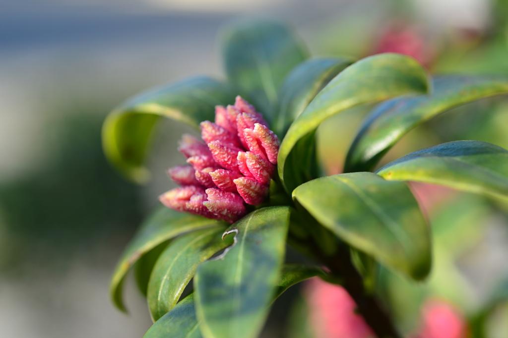 季節の花DXCII!