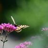 花と蝶MLI!
