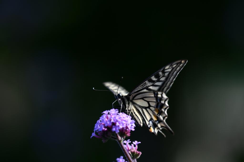 花と蝶MCXXII!