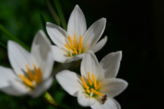 季節の花DXVII!