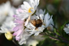 花と蝶CDLXXXI!