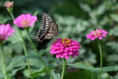 花と蝶MDCCXXXII!