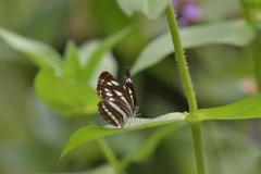 花と蝶MMCCLV!