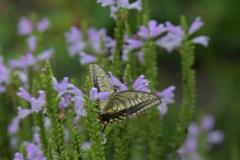花と蝶MMCCLVII!