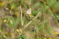 花と蝶MIII!