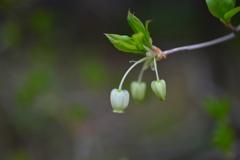 季節の花DCLVII!