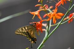 花と蝶MCCCLXXXV!