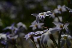 季節の花DCLI!
