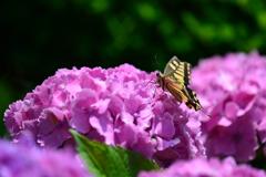 花と蝶CCIII!