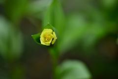 季節の花DCLXII!