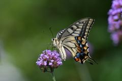 花と蝶MCCLX!