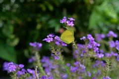 花と蝶MCCXLVII!