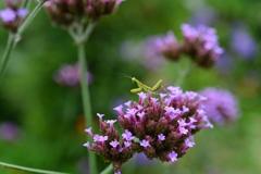 虫・昆虫と花CLIV!