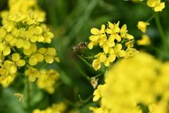 虫・昆虫と花CLXXIII!