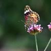 花と蝶CCCLXII!