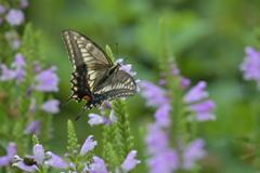 花と蝶MMCCLIX!