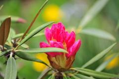 季節の花DCLXVIII!